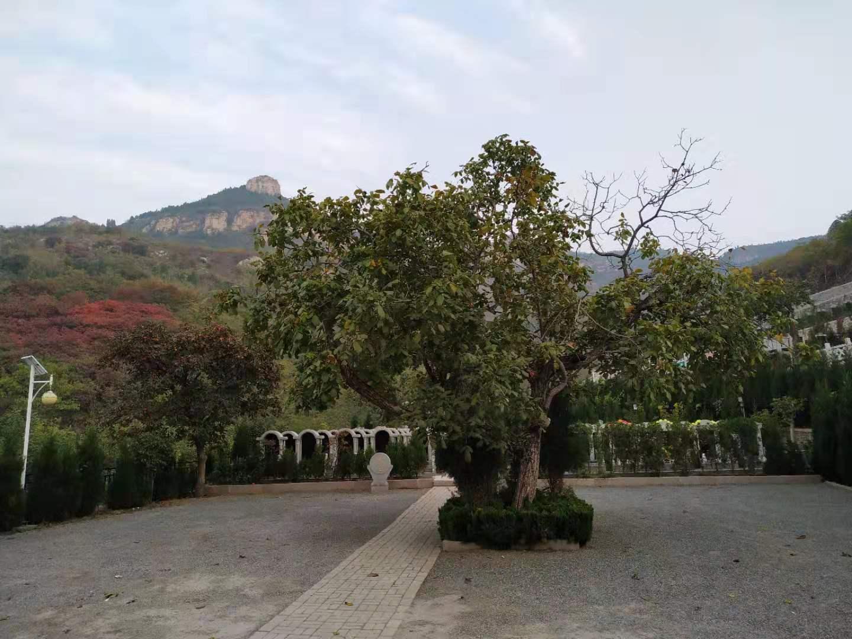 济南太甲山公墓